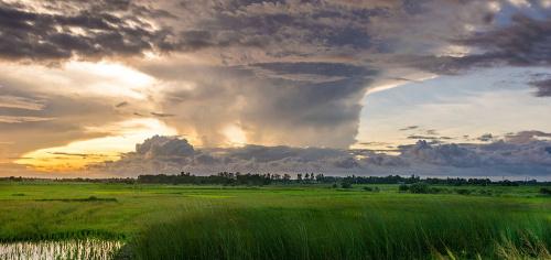 Прогнозы погоды для сельского хозяйства